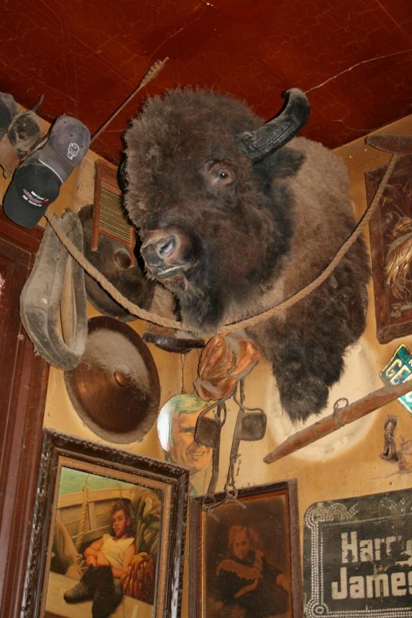 Genoa buffalo